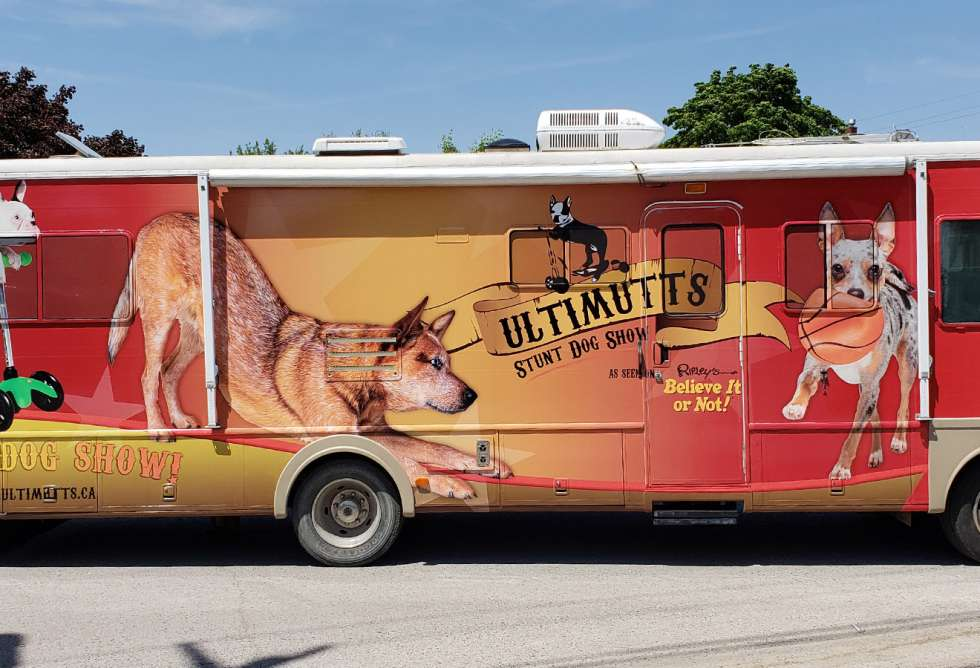 Ultimutts Stunt Dog Show Vehicle Graphics for RV by Why Design
